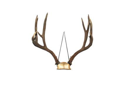 Grimm vintage antlers