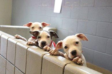 spca pups
